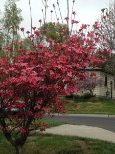 Spring in Bemiss